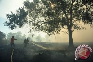 Lima hektare lahan terbakar di Singkawang
