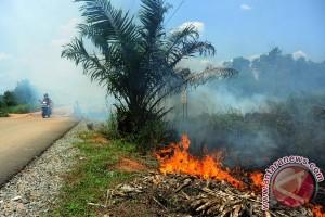 Pembakar lahan harus ditindak tegas