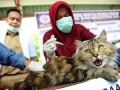 Kemenkes Salurkan Bantuan Antisipasi Rabies