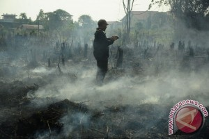 Fire ravages tens of hectares of peatland in West Kalimantan
