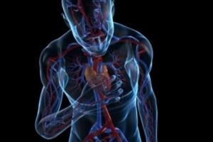 80 Persen Kematian Dini Karena Kardiovaskuler