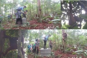 BKSDA Kalbar Lepasliarkan Dua Orangutan Ke Taman Nasional
