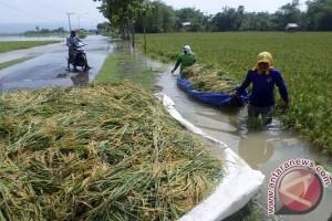 Tanaman Lada di Sambas Terendam Banjir
