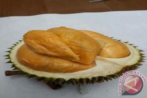 Mendagri :  Durian Balai Lebih Nyaman Dari Durian Malaysia