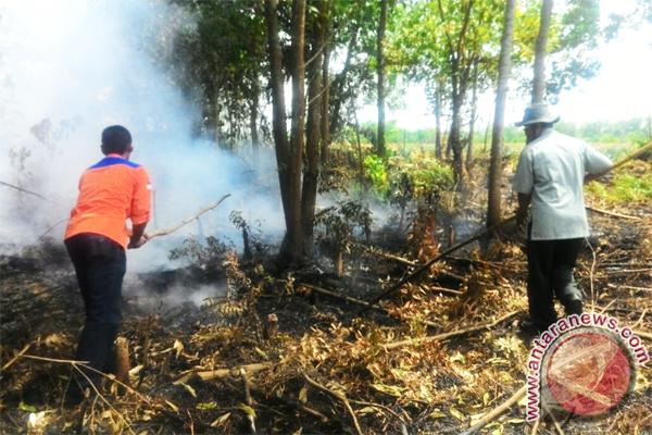 BPBD Terus Berupaya Padamkan Lahan Gambut Terbakar