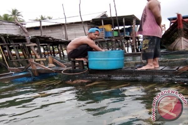 Ikan ini harganya Rp150 ribu/kg di Putussibau