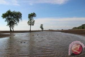 Pesona Pantai Hutan Mangrove Desa Tasik Malaya
