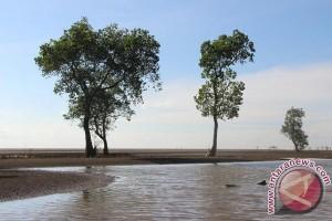 Sekda Minta Masyarakat Pesisir Tanam Kembali Mangrove