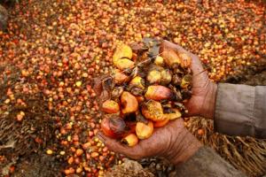 Darmin tegaskan sawit industri yang paling strategis bagi Indonesia