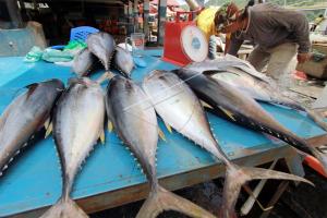 Pemerhati : Stok Ikan Berkurang Dorong Harga Naik