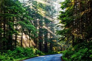 Pemkot Pontianak Ancam Pidanakan Perusak Pohon