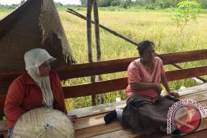 Perempuan Petani Kalbar Mencoba Bertani Metode Hazton