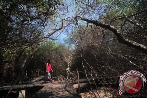 Distan Singkawang salurkan bantuan kelompok peduli mangrove