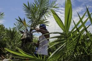 Distan: Investor PKS Butuh 1.200 Hektare Plasma
