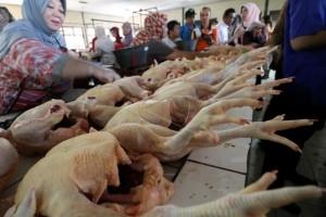 Harga ayam di Pontianak belum normal