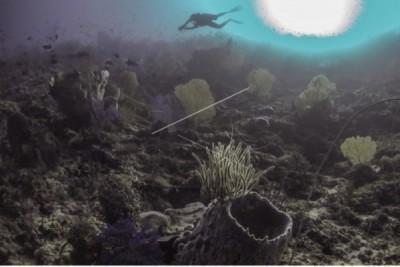 Tebing Karang Bawah Laut