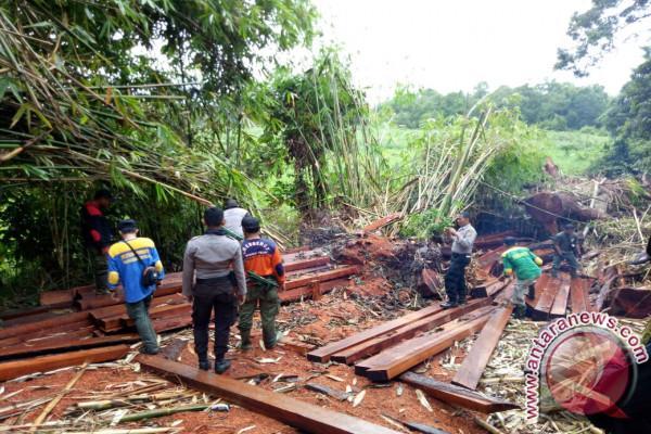 Balai TNGP Amankan Ratusan Batang Kayu Diduga Ilegal