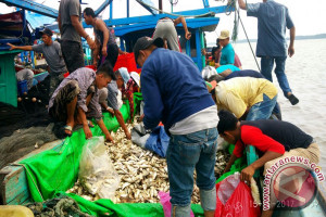 Nelayan Obral Ikan Kembung di Kayong Utara