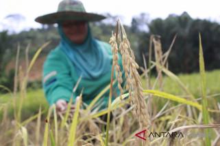 Sutarmidji ajak petani tingkatkan produksi