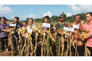 Desa Bange bertekad jadi sentra jagung Bengkayang
