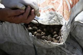Karantina Entikong gagalkan pengiriman 15 ton kerang