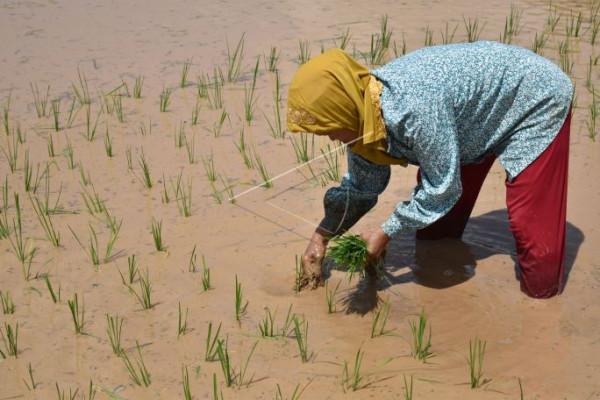 KTNA diharapkan tingkatkan ekonomi petani