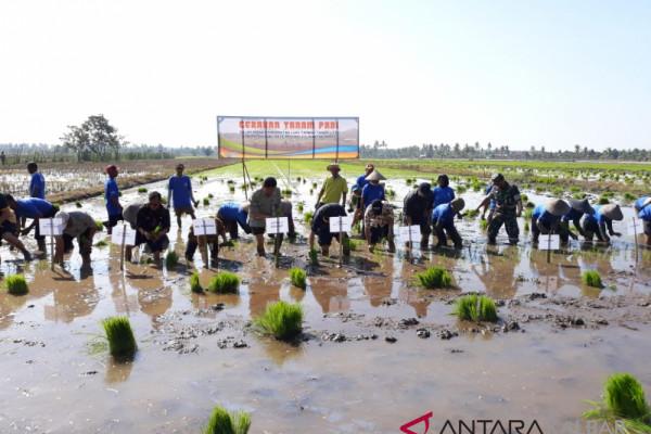 Produksi pertanian Kalbar 13 besar nasional