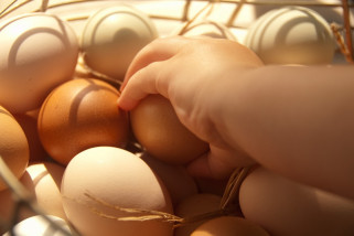 Stok telur dan ayam di Kalbar aman