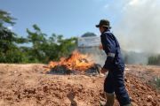 Entikong Quarantine Station destroys 8 tons of illegal red onion