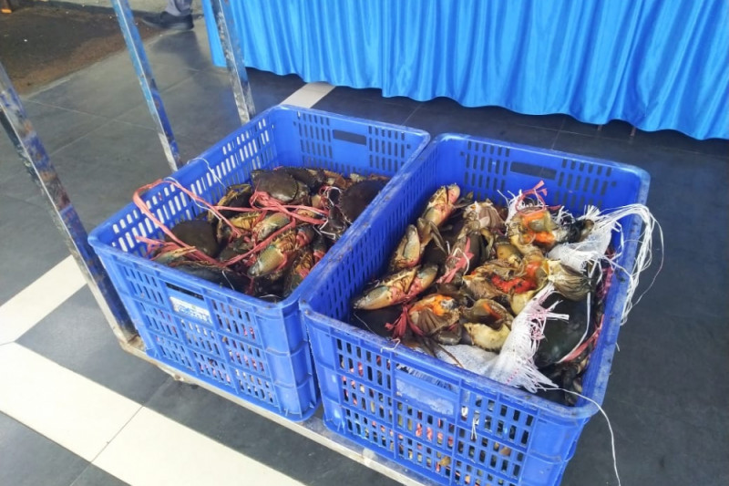 Police foil the smuggling of 2,609 crabs to Malaysia