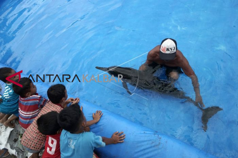 Lumba-lumba yang terdampar