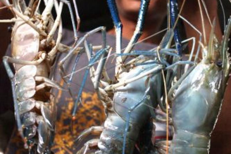 Ikuti Turnamen Mancing Udang Galah se-Kalbar di Sambas