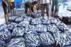 Potensi Perikanan Tanah Bumbu