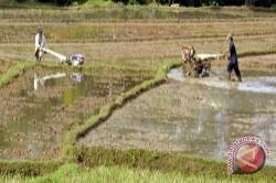 Tanbu Targetkan Tanam Padi 24.500 Hektare