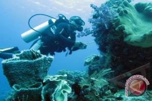 DKP Monitoring Terumbu Karang Di Kawasan Konservasi