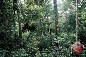 Community Involvement  In Forest Guarding Constrained by Intimidation
