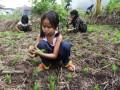 Petani Tinggalkan Ladang Berpindah