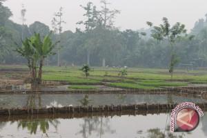 Realisasi Tanam Padi Banjar Capai 72,5 Hektare
