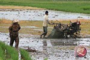 Tanbu Targetkan Tanam Padi 26.200 Hektare