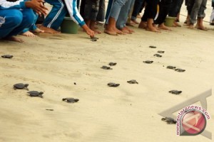 Kotabaru Guided to Turtle Conservation