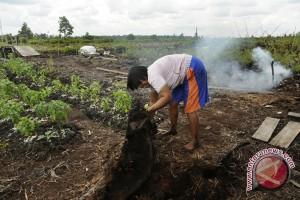 Kabupaten Gambut Raya Alternatif Pengembangan Wilayah