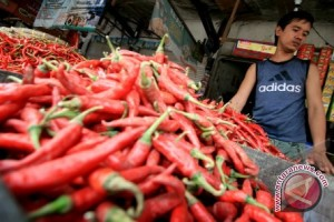 Chili prices Rp100.000 per kg in Kotabaru