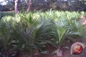 DPRD Belajar  Perkebunan Terpadu Lampung