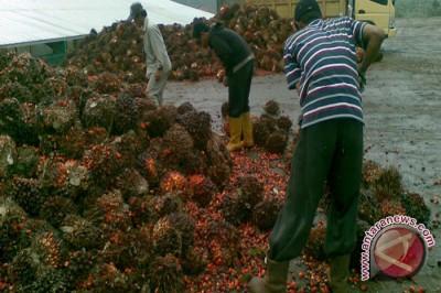 Laporan Khusus Hari Jadi ke-65 Kalimantan Selatan (3)