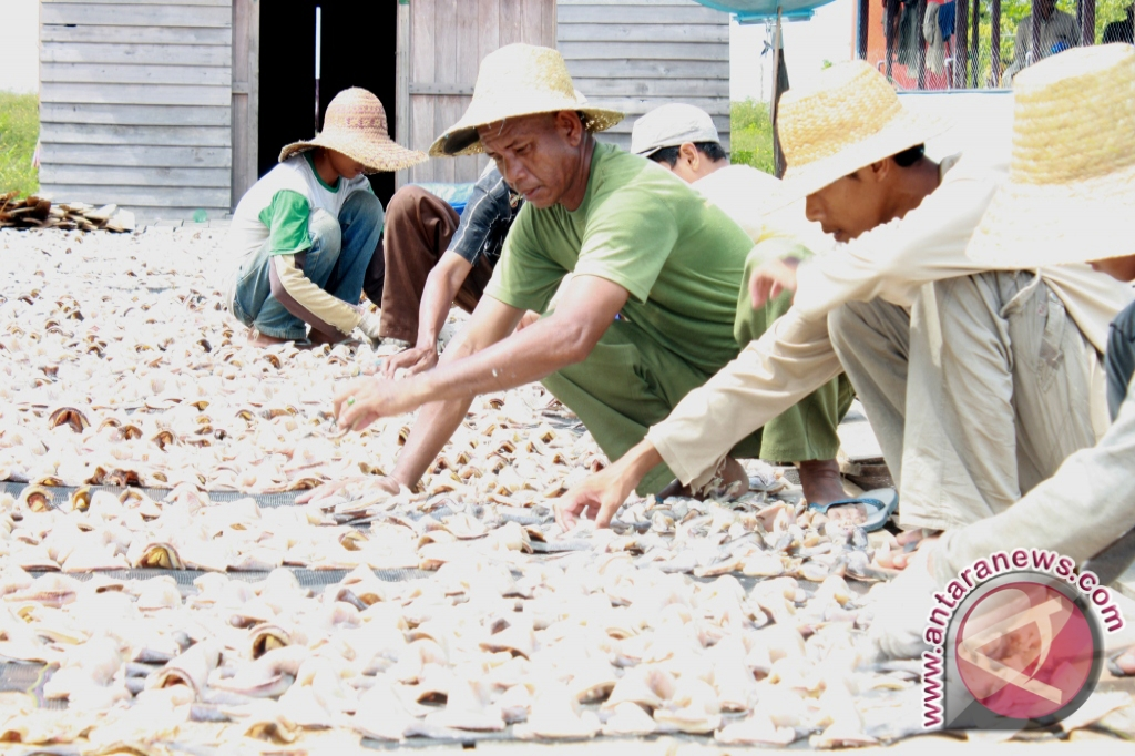 Pemkab Gali Potensi Perikanan Darat Kecamatan Panyipatan