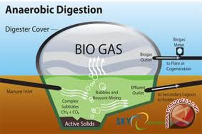 Masyarakat Buat Gas dan Energi Listrik Dari Eceng Gondok