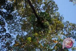 Pengelolaan Hutan Tala Percontohan Nasional
