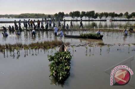 Bupati Kubu Raya Resmikan Jalur Ekowisata Mangrove