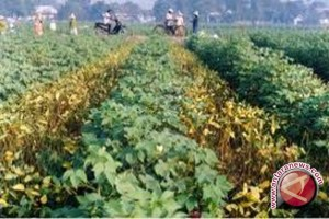 Kotabaru to produce 4,140 tons soybeans