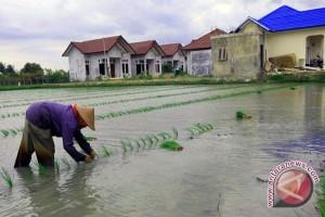 Petani Tabalong Kalsel Uji Coba Padi Organik